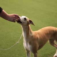 Preats for friandises: La recherche montre que dresser un chien avec des friandises est plus efficace que les méthodes alternatives.