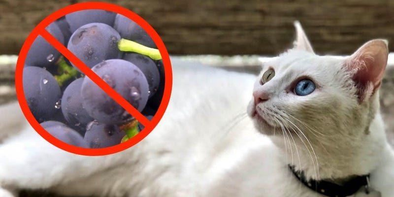 Des choses que tu ne savais pas étaient toxiques pour les chats