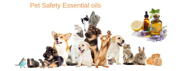 diffuser des huiles essentielles autour des chiens -diffuser l'huile d'eucalyptus pour animaux domestiques