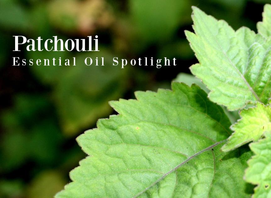 Pleins feux sur les huiles essentielles de patchouli