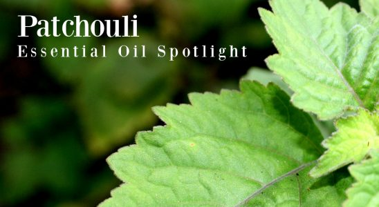 L'huile Spirit of Patchouli - Good Witches Homestead
