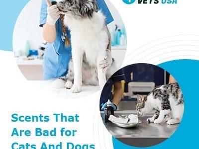 Parfums mauvais pour les chats et les chiens